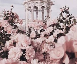 aesthetic, architecture, and roses image