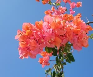 beautiful, flowers, and orange image