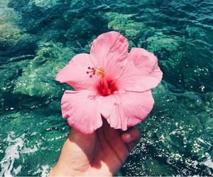 beach, flower, and summer image
