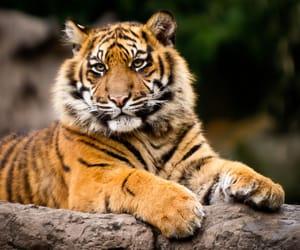 rotterdam, blijdorp, and tiger image