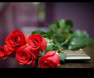 red, red rose, and roses image