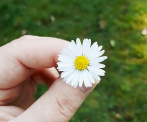 daisy, finger, and home image