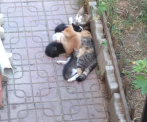 baby, mother, and cat image