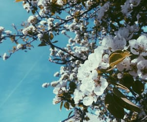 blue sky, flowers, and nature image