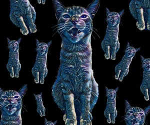 cats, cosmo, and wallpaper image