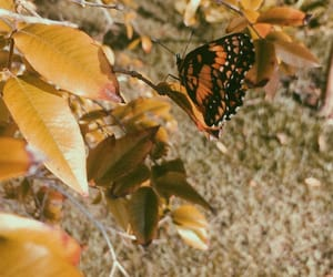 butterflies, aesthethic, and leaves image