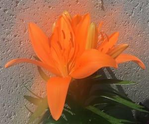 aesthetic, flower, and orange image