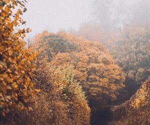 autumn, colors, and mist image