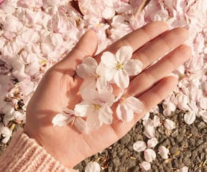 asian, blossom, and pink image