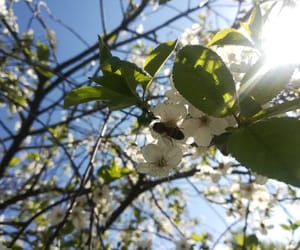 bee, cherry, and spring image