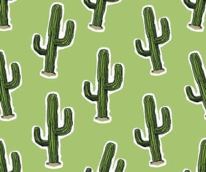 background, cactus, and green image