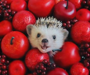 baby animals, cute animals, and hedgehog image