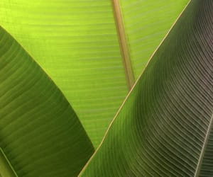 aesthetic, green, and leaf image