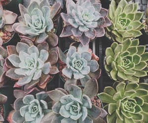 aesthetic, beautiful, and cactus image