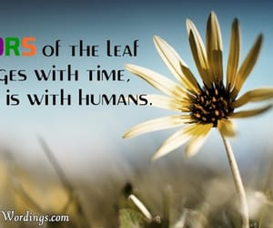 life quotes, life sayings, and true quotes about life image