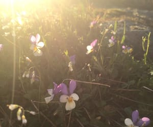 flowers, spring, and sunset image