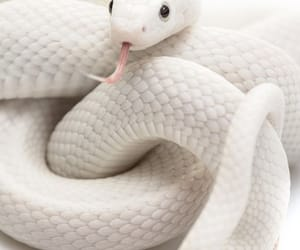 snake and white image