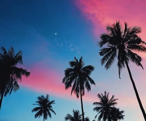 california, palm trees, and sky image