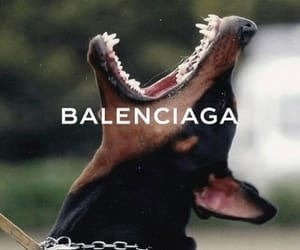 Balenciaga, dog, and aesthetic image
