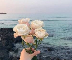 flowers, rose, and sea image