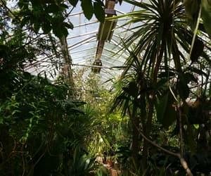 adventure, garden, and green image