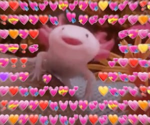 axolotl, meme, and memes image