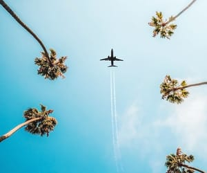 palm trees, plane, and sky image