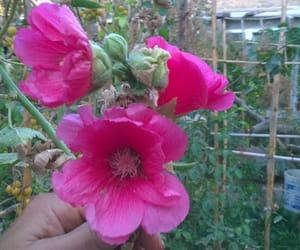 garden, gardening, and beautifulflower image