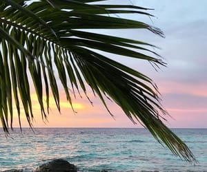 beach, beautiful, and palmtrees image