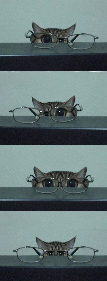 cat and fun image