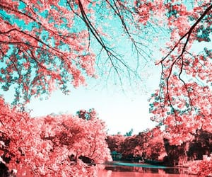 pink, nature, and inspiration image