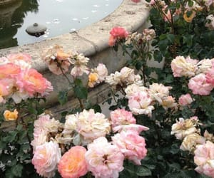 flower, flowers, and rosa image