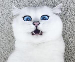 aww, big, and cat image