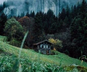 nature, green, and home image