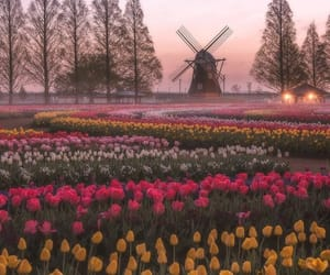 holland, windmill, and bulbfields image
