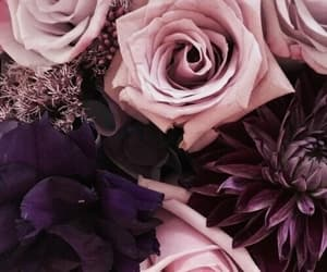 roses, violet, and flowers image
