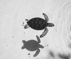 animals, beautiful, and ocean image