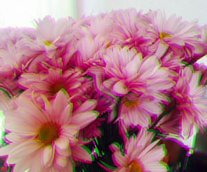flower power, flowers floral, and colors photography image