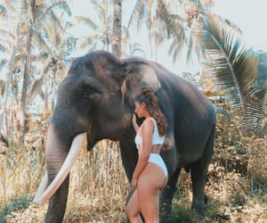 animals, bali, and bikini image
