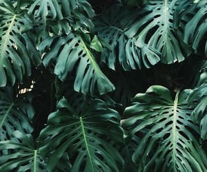 green, palm, and plants image