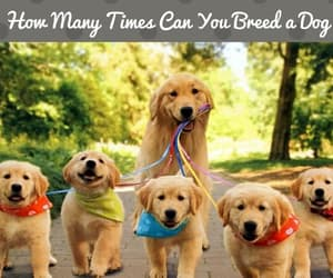 breed, breeding, and dog image