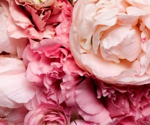 background, flowers, and peony image