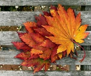 autum fall image