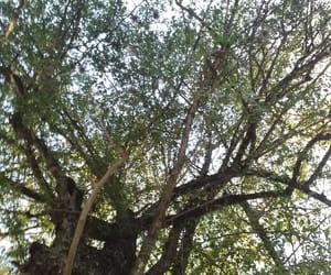 arbol, arboles, and paisaje image