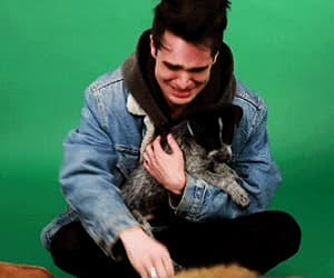 animal, brendon urie, and dog image
