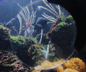fish, sea life, and fish eye image