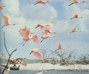 bird, pink, and flamingo image