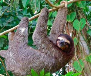 catamaran tour costa rica, costa rica family tours, and costa rica monkey tours image