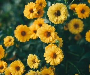 beautiful, kaybolankelebek, and flower image