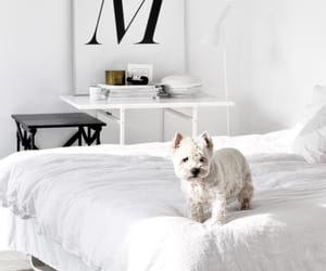 dog, bed, and home image